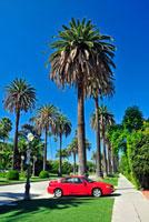 ヤシの木の並木道と赤い車