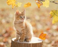 切り株の上のトラ猫 01449010425| 写真素材・ストックフォト・画像・イラスト素材|アマナイメージズ