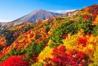 磐梯吾妻スカイラインより望む吾妻小富士と紅葉する天狗の庭