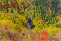 紅葉と王滝