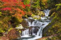 紅葉とおしどり隠しの滝