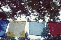 木の間に吊るされた4枚のバンダナ
