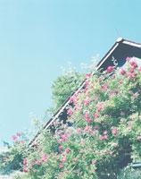 赤い花が咲く家