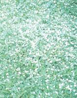 芝生の上の桜の花びら