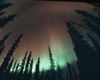 タイガの森と北天のオーロラ(緑色) ベテルス村 アラスカ
