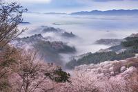 上千本より桜の吉野山