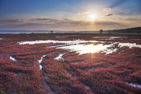 朝の能取湖珊瑚草
