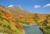 紅葉の大雪山高原沼めぐり 高原沼