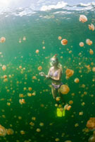 Swimming with harmless Jellyfishes