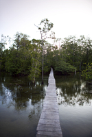 INDONESIA, Mentawai Islands, Kandui Resort, a small tsunami foot bridge through the mangroves, leading to higher ground