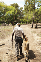 MAURITIUS, Flic en Flac, Lion tamer Marcelin Pierre-Louis walks with a lioness at Casela Nature and Leisure Park in western Maur