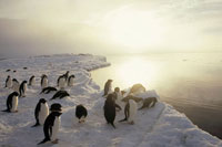 ADELIE PENGUINS ROSS SEA ANTARCTICA