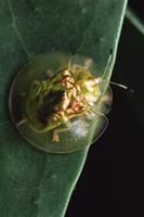 甲虫類 01543000741| 写真素材・ストックフォト・画像・イラスト素材|アマナイメージズ