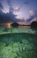 夕日とさんご礁(紫・緑色) インドネシア