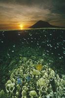 夕日とサンゴ インドネシア