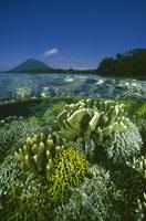 さんご礁と青空 北スラウェシ インドネシア