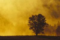 日の出のグランドティートン国立公園 ワイオミング州,