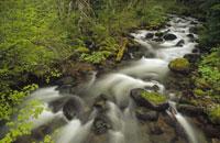 春のフッド山国有林の川 オレゴン州 アメリカ