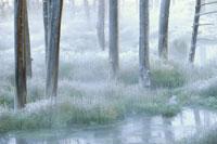 冬のイエローストーンの朝の風景 ワイオミング州