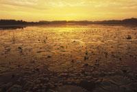 SUNRISE,THE PONGOLO FLOOD PLAIN,S AFRICA