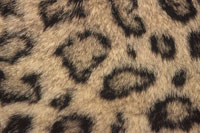 PATTERN OF SNOW LEOPARD SKIN