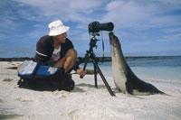 砂浜の外国人の男性フォトグラファーとアシカ ガラパゴス諸島