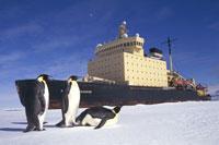 冬の砕氷船と3羽のコウテイペンギン 南極大陸