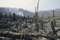 SLASH AND BURN RAINFOREST, MADAGASCAR