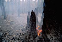 煙り続ける山火事 01543011372| 写真素材・ストックフォト・画像・イラスト素材|アマナイメージズ