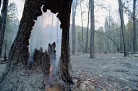 燻り続ける山火事 01543011373| 写真素材・ストックフォト・画像・イラスト素材|アマナイメージズ