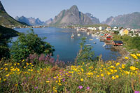 グラニット山と夏の野草の花に囲まれた漁村