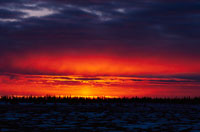 北方林の日没