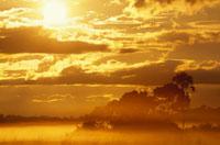 もやのかかった草原に登る太陽