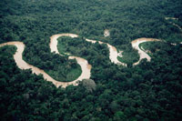 アマゾンの森を通る曲がりくねった川