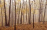 森の落葉樹