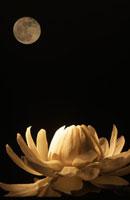 満月の下のオオオニバス