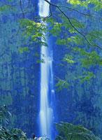 Akaka Falls cascading down cliff