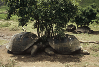 ガラパゴスゾウガメ 01543016665| 写真素材・ストックフォト・画像・イラスト素材|アマナイメージズ