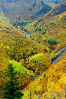 MacKenzie River valley、 Cape Breton Highlands National Park