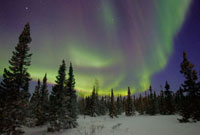 Northern lights or aurora borealis over boreal forest�CNorth