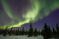 Northern lights or aurora borealis over boreal forest,North
