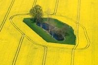 Oil Seed Rape (Brassica napus) fields, Bad Doberan, Germany