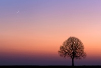 Lone tree on the horizon, Wiesbaden, Germany