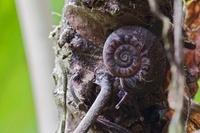 Snail, Andes, Ecuador