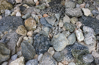 Fossilized corals on beach, Christmas Island, Indian Ocean,