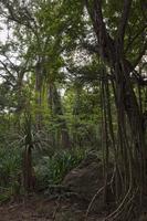 Rainforest interior showing variety of fauna, Christmas Isla