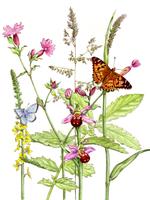 チョウと植物