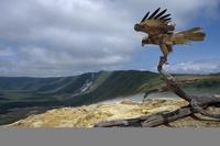 ガラパゴスノスリ 01543047330| 写真素材・ストックフォト・画像・イラスト素材|アマナイメージズ