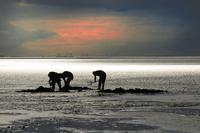 魚の餌を掘る人々 シルエット 01543047407| 写真素材・ストックフォト・画像・イラスト素材|アマナイメージズ