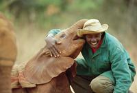 孤児になったアフリカゾウの世話をする人